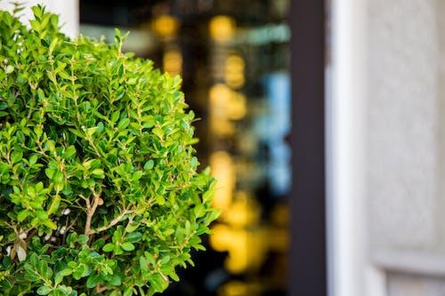 Fotos de stock gratuitas de al aire libre, crecimiento, hojas, planta