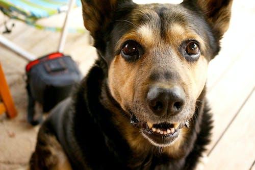 Základová fotografie zdarma na téma chlapec, dobrý, německý ovčák, pes