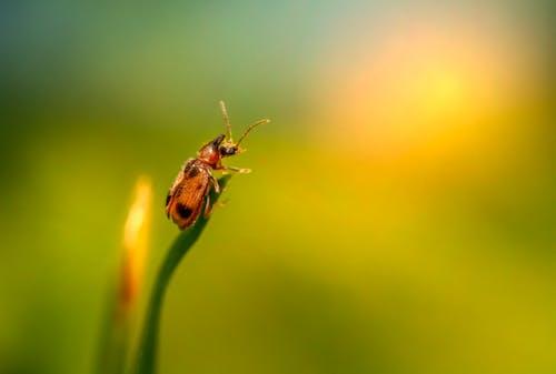 Fotos de stock gratuitas de animal, entomología, hoja