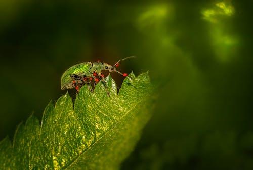 Fotos de stock gratuitas de Beetle, entomología, escarabajo