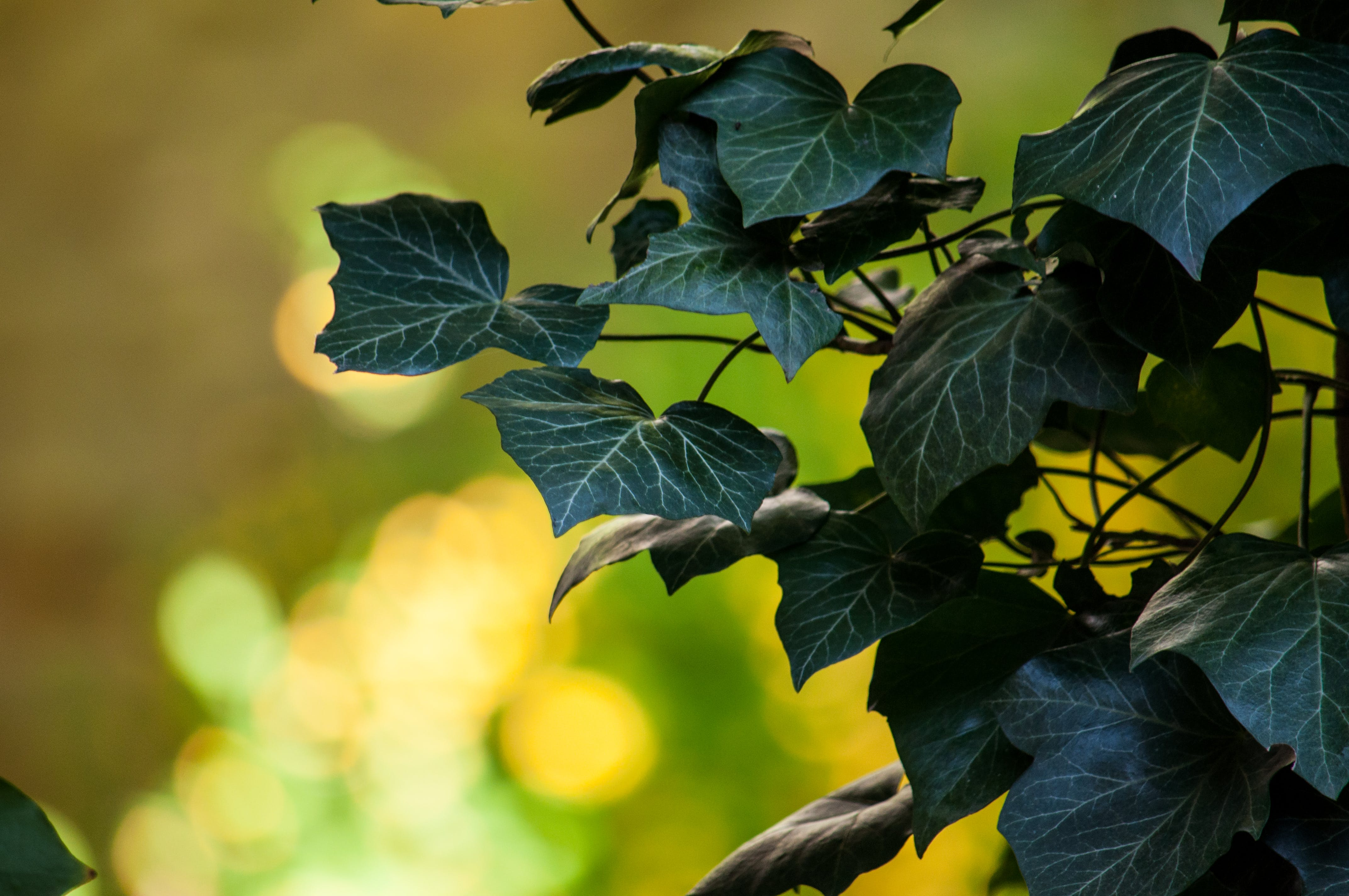Selective-focus Photography of Green Leaf Plant