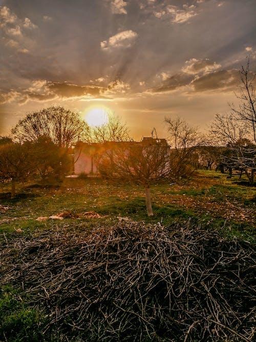 Gratis stockfoto met bomen, dorp, dramatisch, dramatische hemel