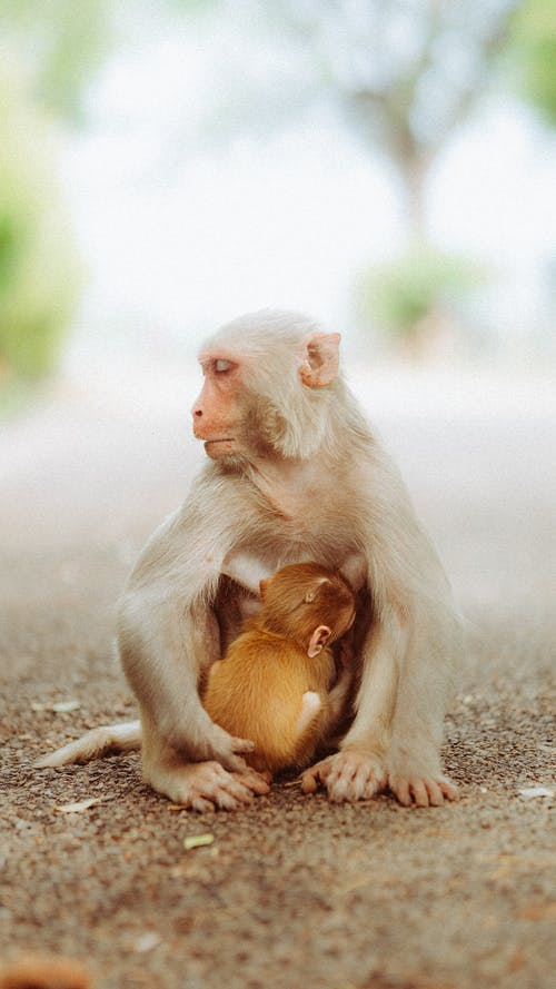 Fotos de stock gratuitas de al aire libre, animal, bebé