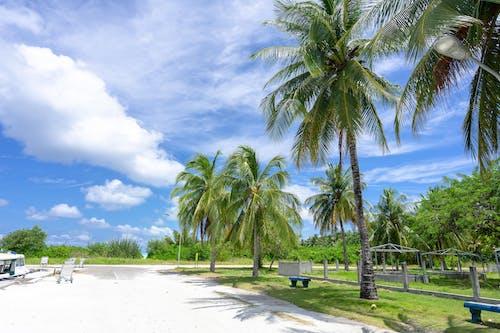 Palm Trees on Beach Under Blue Sky