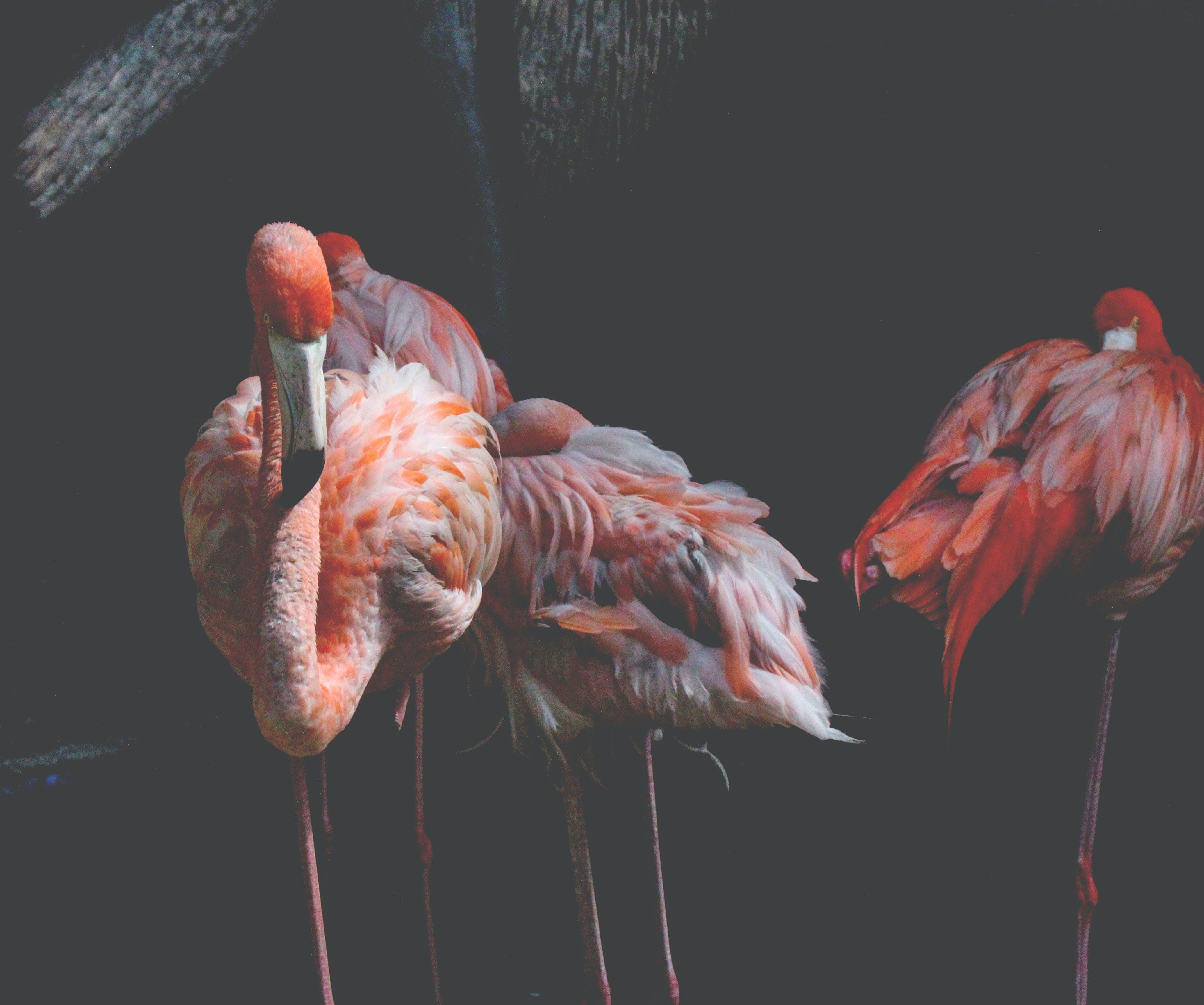 動物, 大鳥籠, 天性, 水 的 免费素材照片