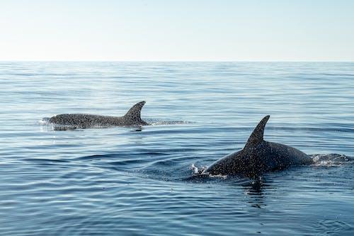 Black Whale in the Sea