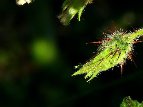 Foto stok gratis fotografi tanaman, kilang, latar belakang tanaman