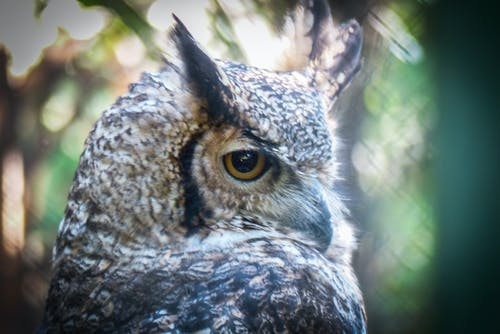 Foto stok gratis burung pemangsa, mata yang ekspresif