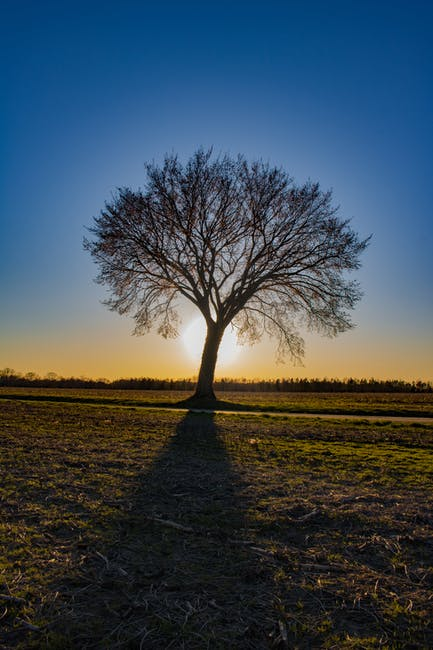 Tree in the Middle of the Field Golden Hour Photography