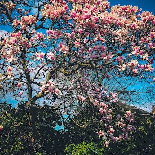 Photos gratuites de arbre, branche, brillant, contre-plongée