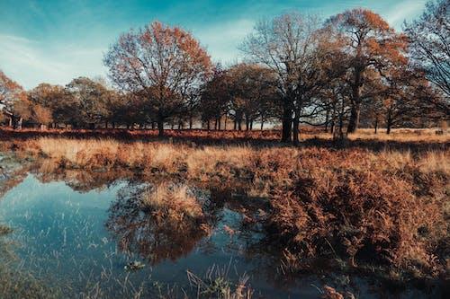 Безкоштовне стокове фото на тему «відображення, вода, Денне світло, дерева»