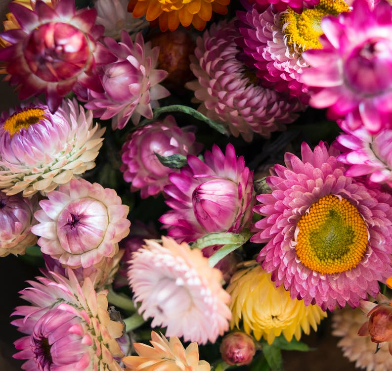 Purple and White Multi-petaled Flower Lot Closeup Photography