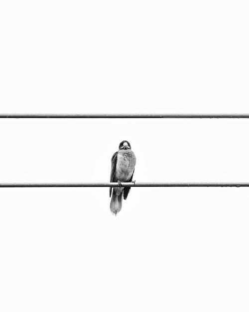 Free stock photo of bird, birds, birds eye view