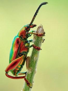 Jewel Beetle on Tree Branch