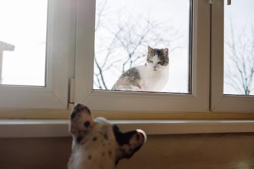 インドア, スタジオ, ネコの無料の写真素材