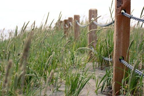 Free stock photo of beach, beach sand, fence
