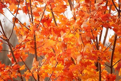 Free stock photo of autumn, autumn color, fall