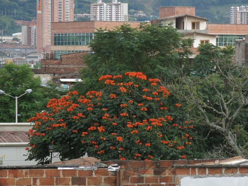 Free stock photo of city, Medellin, trees, urban scene