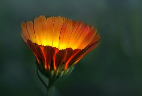 Fotos de stock gratuitas de al aire libre, belleza en la naturaleza, botánica
