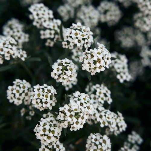คลังภาพถ่ายฟรี ของ ดอกไม้, ดอกไม้ฤดูใบไม้ผลิ, ธรรมชาติที่สวยงาม