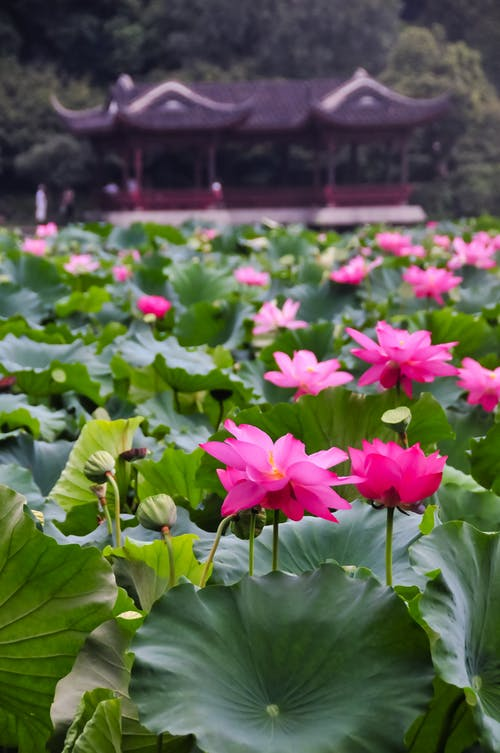 Ingyenes stockfotó biliárd, fényes, hangzhou témában