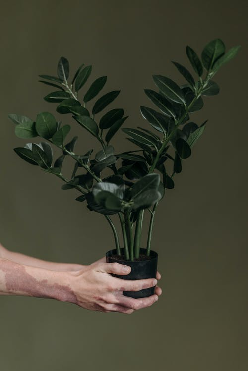 Foto profissional grátis de brilhando, cuidado de planta, dando