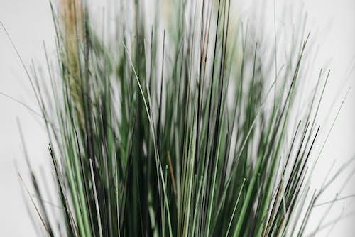Imagine de stoc gratuită din ascuțit, close-up extrem, cu țepi