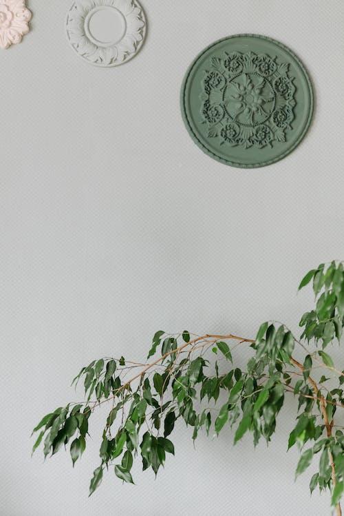 Darmowe zdjęcie z galerii z benzoes, biały, dekoracja
