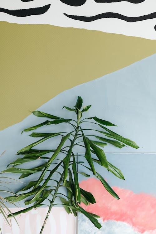 คลังภาพถ่ายฟรี ของ ก้านดอก, กำแพง, ความงามในธรรมชาติ
