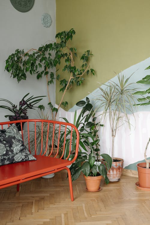Foto profissional grátis de assento, Banco, canto da planta