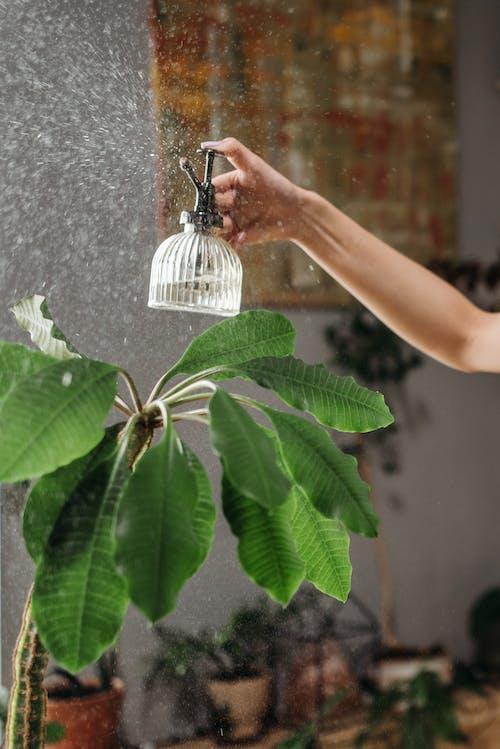 Imagine de stoc gratuită din botanică, brațul uman, decor casnic
