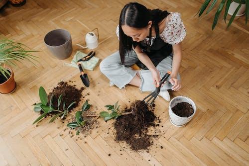 Бесплатное стоковое фото с ботаника, в помещении, Взрослый