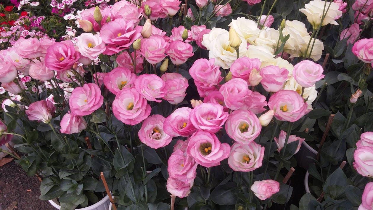 çiçek, güzel, güzel çiçekler