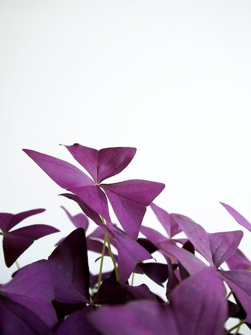 Gratis stockfoto met #binnen, aantrekkelijk mooi, abstract