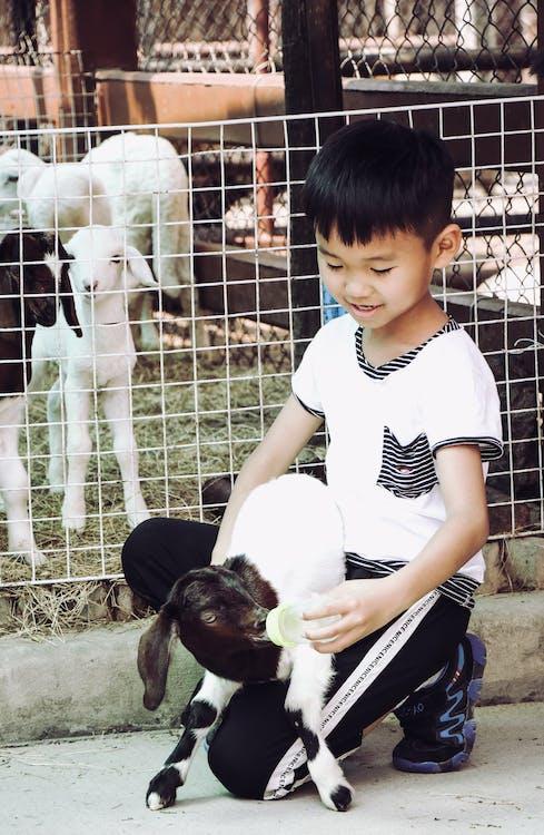 Ảnh lưu trữ miễn phí về Anh yêu em, động vật, trẻ em