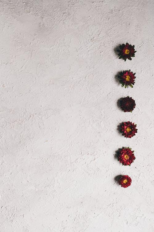 Imagine de stoc gratuită din artă, botanică, cap de floare