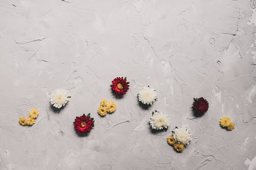 คลังภาพถ่ายฟรี ของ กลีบดอกไม้, ความบริสุทธิ์, ความเรียบง่าย