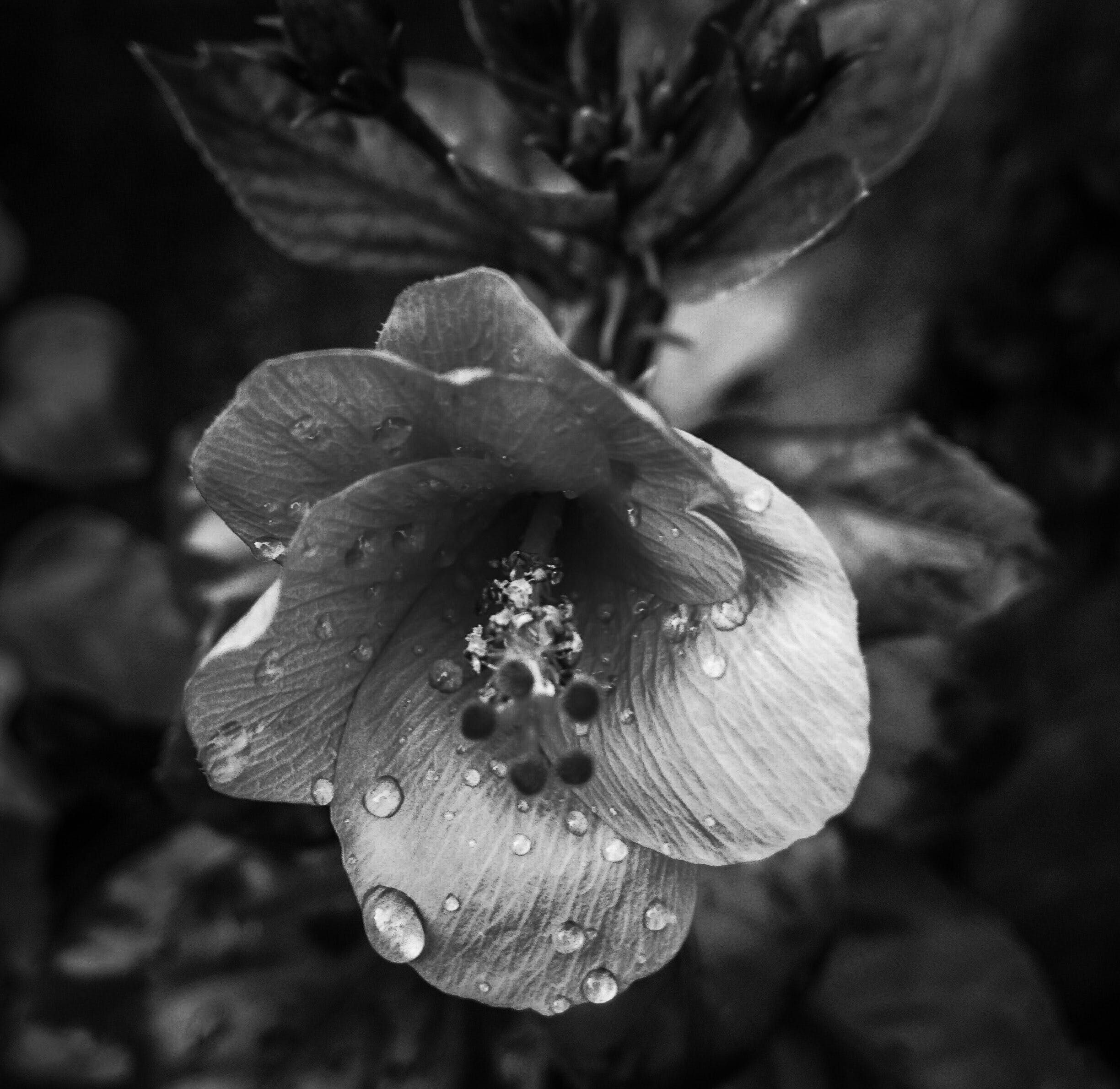 Grayscale Photo of Petaled Flower