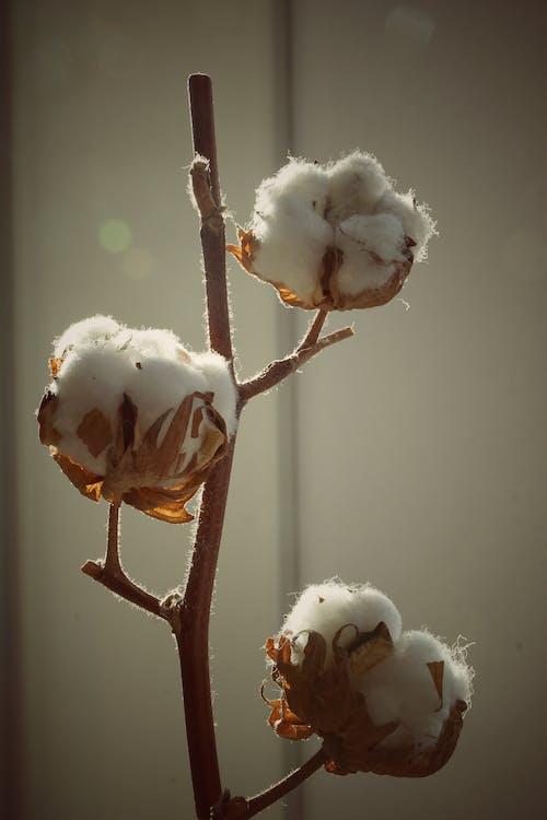 Безкоштовне стокове фото на тему «#minimalism #minimalist #cotton #shadows #warmth»