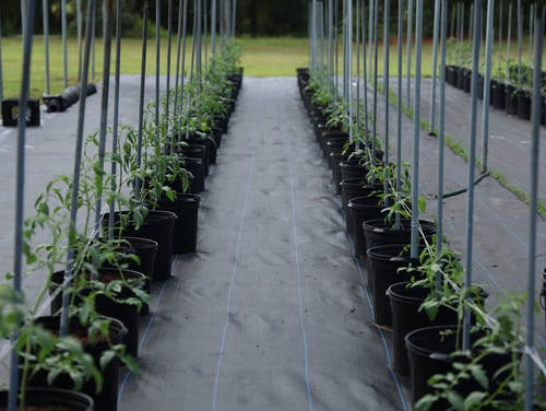 Potted Plants Placed on Rows