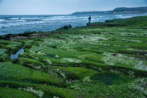 Ingyenes stockfotó halász, hullám, szabadtéri, zöld zátony témában
