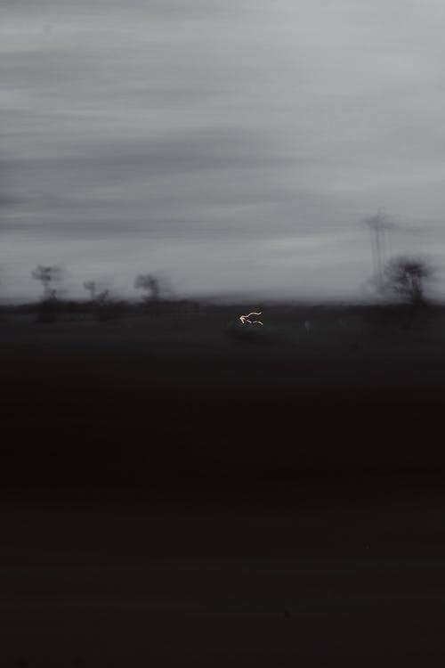 Základová fotografie zdarma na téma stín