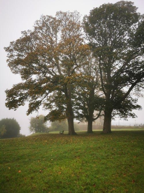 Free stock photo of nature, park, tree