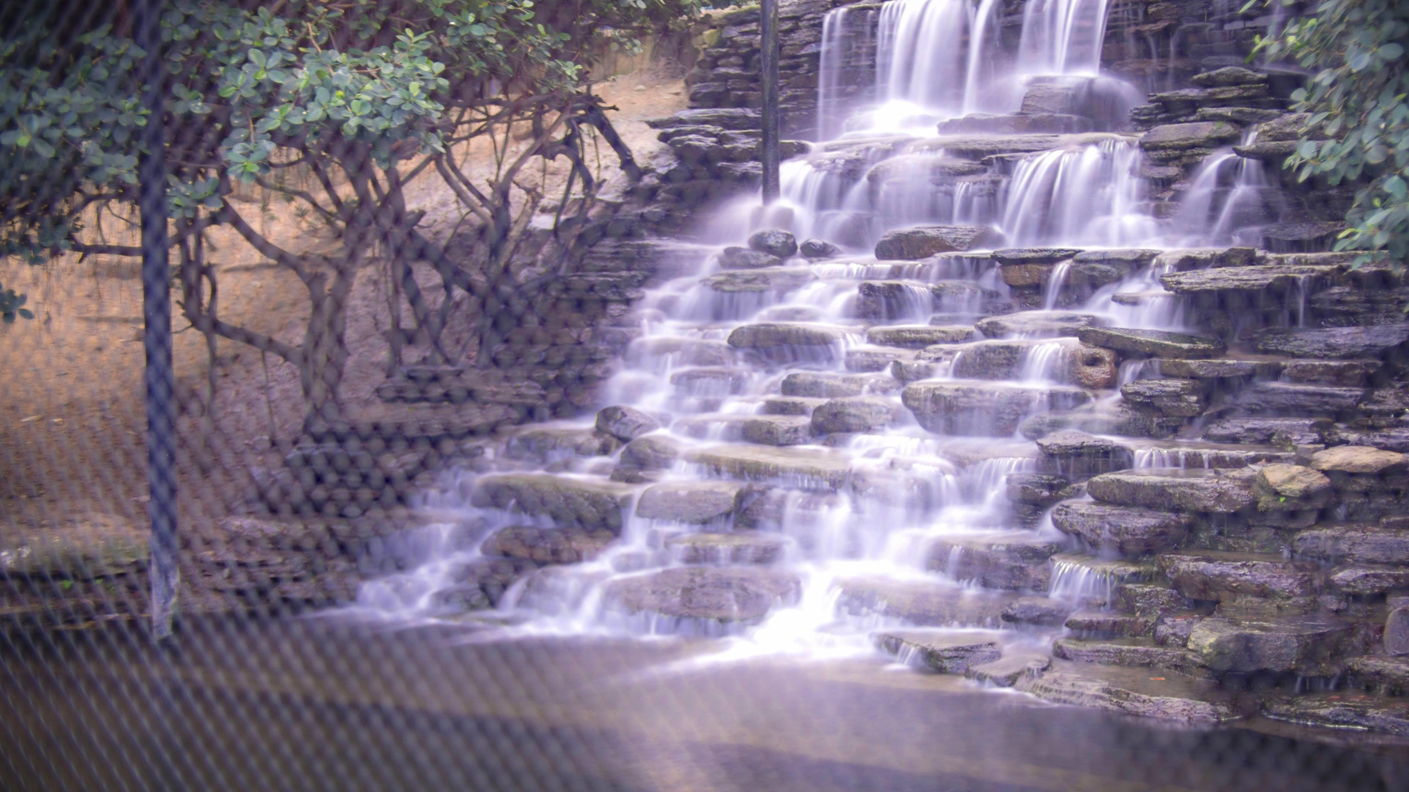 Free stock photo of nature, water, purple, park