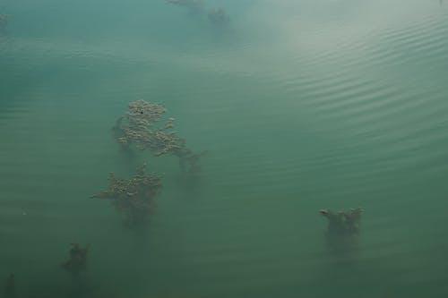 Free stock photo of underwater, water