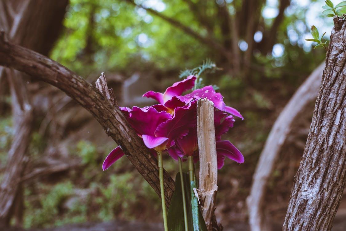 紫色, 紫色小花, 花