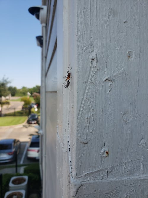 Free stock photo of ant, prey, red