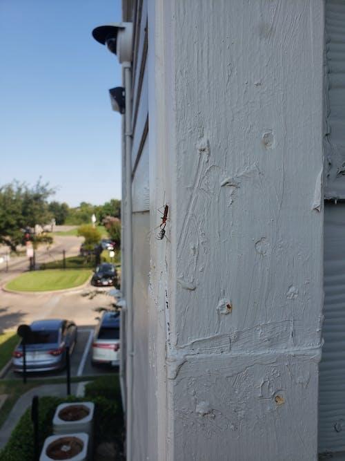 Free stock photo of ant prey, spider prey