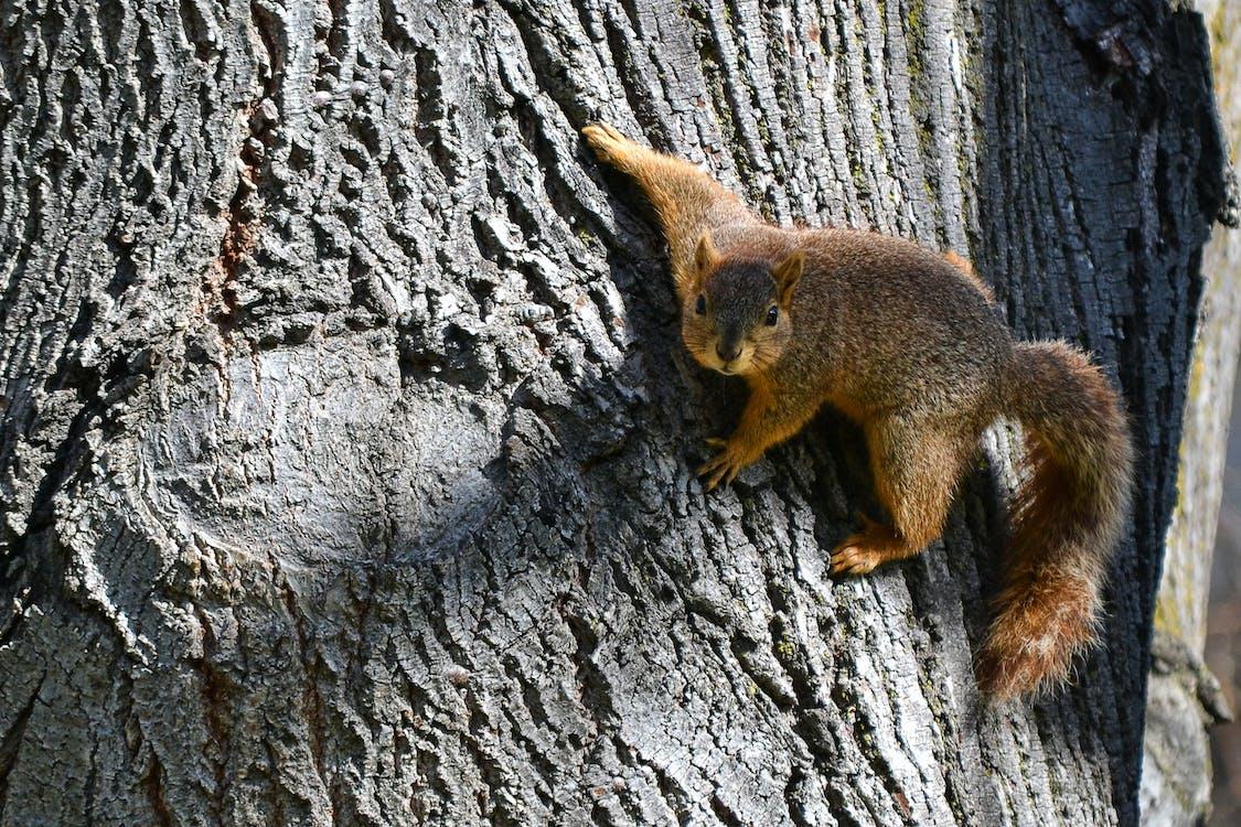 Brown Squirrel on Brown Slab