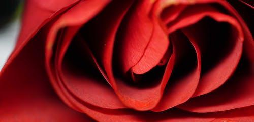 """Základová fotografie zdarma na téma aranžování květin, ï """"î¿îºîºîºîºî¹î½î¿"""
